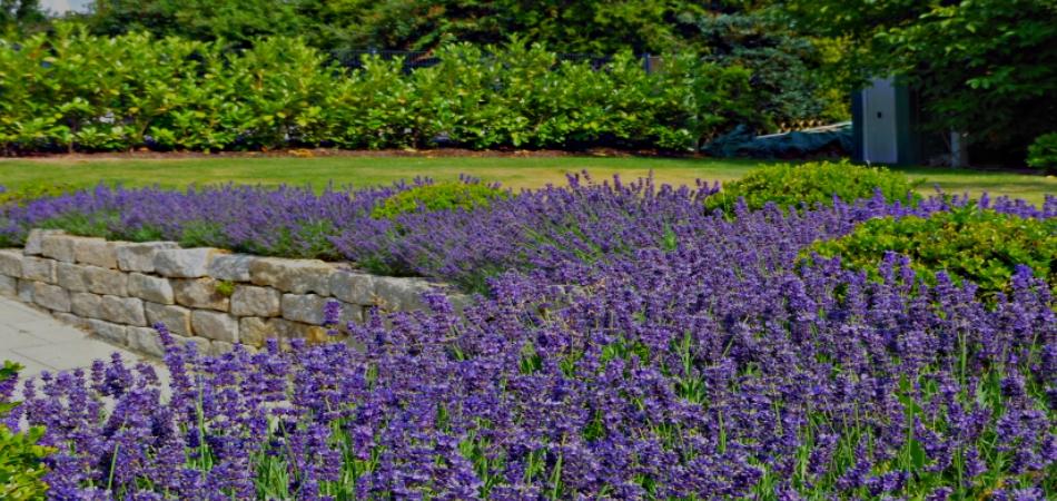 Gartengestaltung germann speyer herzlich willkommen for Gartengestaltung lavendel
